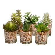 Allstate Floral Assorted Potted Succulent