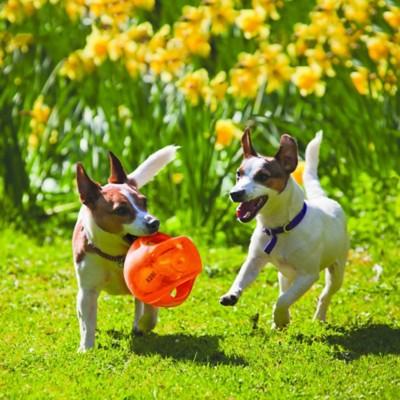 KONG Jumbler Ball Dog Toy