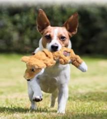 KONG Scrunch Knots Dog Toy