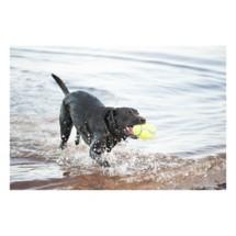 KONG AirDog Football Squeaker Dog Toy