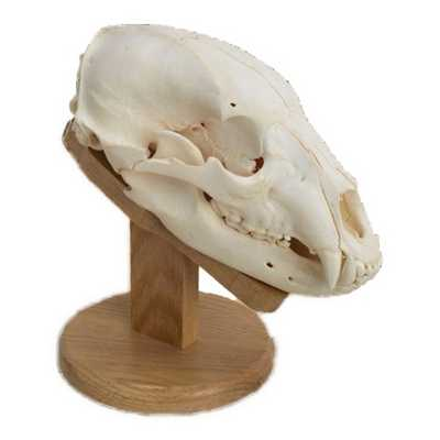 Walnut Hollow Country Solid Oak Skull Mount Kit