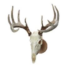 Walnut Hollow Country Solid Oak Skull Mount Kit