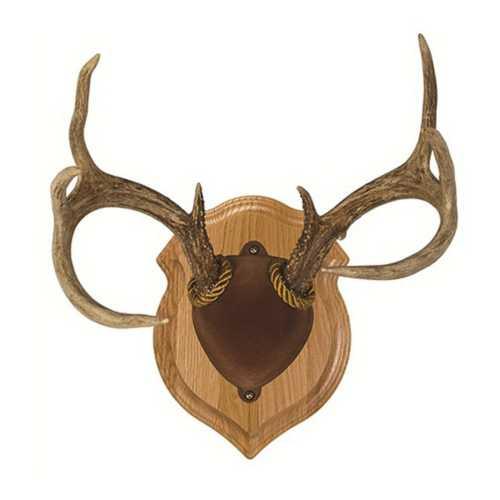 Walnut Hollow Country Deluxe Antler Mount Kit   SCHEELS.com