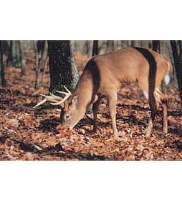 Delta Paper Animal Targets