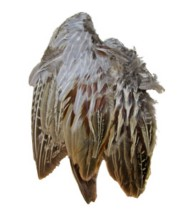 Classic T Wild Pheasant Wings