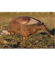 DSD Feeding Hen Turkey Decoy