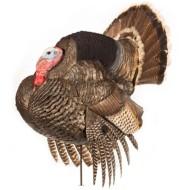 DSD Tom Strutter Turkey Decoy