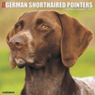 Just German Shorthaired Pointers 2019 Calendar