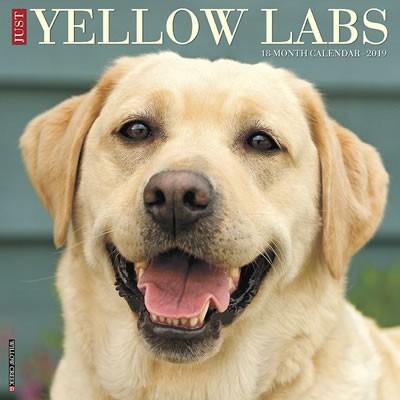 Just Yellow Labs 2019 Calendar
