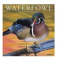 Willow Creek Press Waterfowl 2020 Wall Calendar
