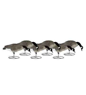Dakota Decoy Signature Series Feeder Geese 6-Pack' data-lgimg='{
