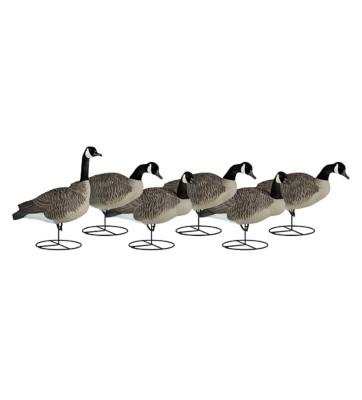 Dakota Decoy Signature Series Upright Geese 6-Pack' data-lgimg='{
