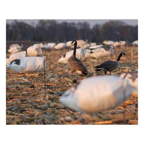 White Rock Rockonomy Snow Goose Windsocks