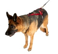 Ultra Paws One Harness