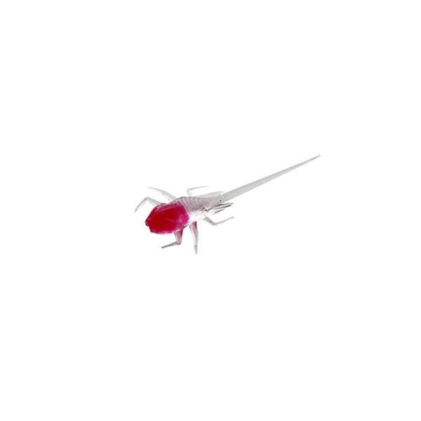 snozberryglow