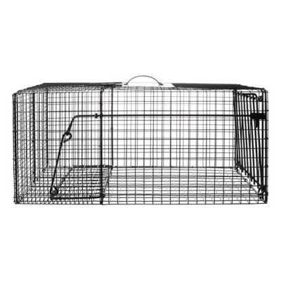 Bridger Racoon Live Cage Trap