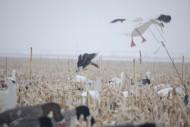 Sillosocks Snow Goose Flapping Decoy