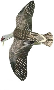 Sillosocks Blue Goose Flapping Decoy