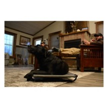 MOmarsh Kennel Dog Cot
