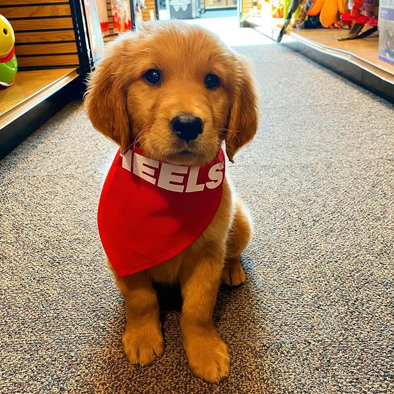 #dogsofscheels