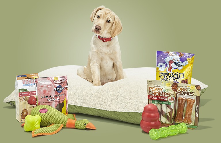 Puppy sitting on bed with chew toys